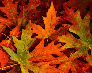 fall-leaves-4